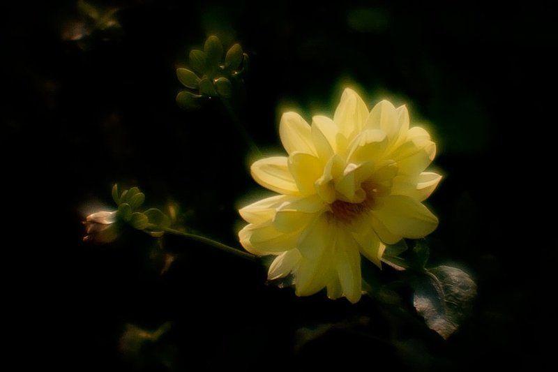 вера, надежда, любовь, софья, именинницы Вот такими золотыми георгинами... Поздравляю я себя с именинами -))photo preview