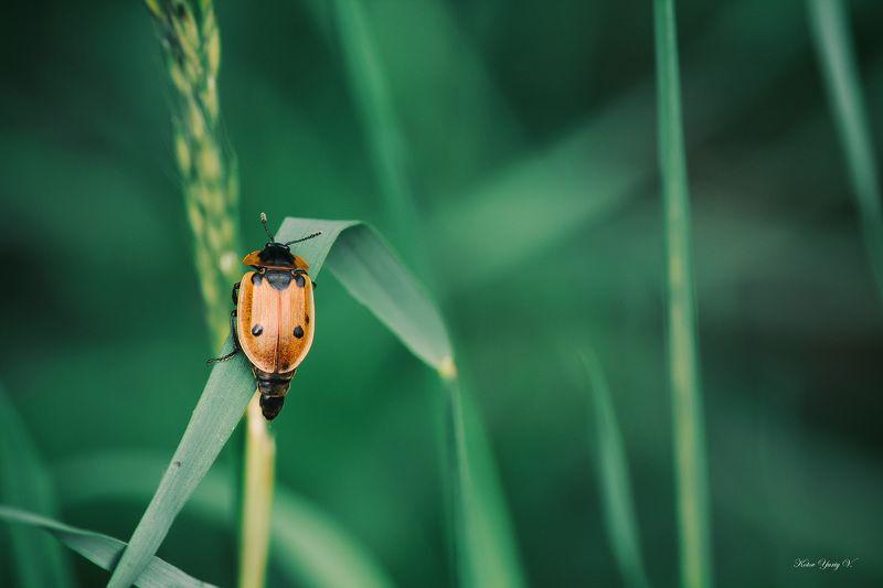 жук, кора, крылья, лапы, тень, черный, красный,цветы,свет,листья ***photo preview