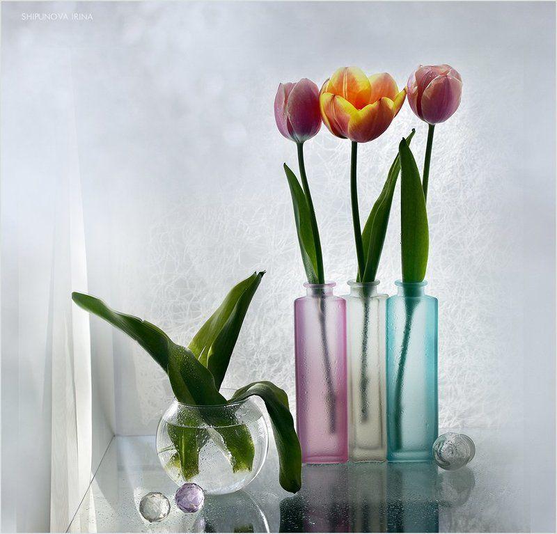 Три тюльпанаphoto preview