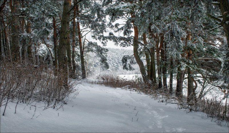 зима, снег, лес, Зимушкаphoto preview