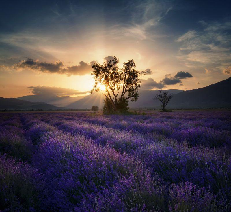 landscape, lavender, болгария, sunset, nature Lavenderphoto preview