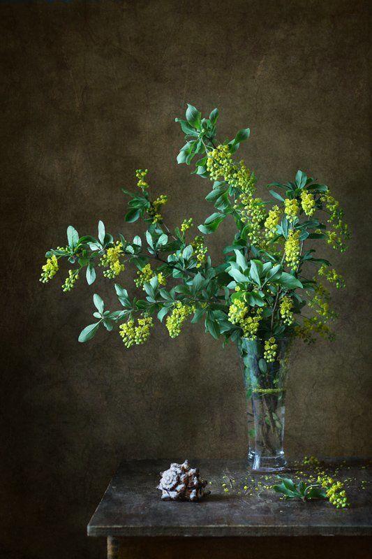 натюрморт, цветы, барбарис, ракушка Цветущий барбарисphoto preview