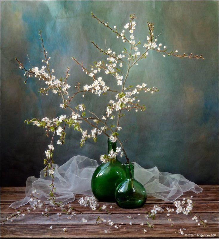 алыча, слива, цветущая, ветки, белые, цветы, весна, цветение, натюрморт, ожидание, долго, нежность Когда весну уже не ждёшьphoto preview