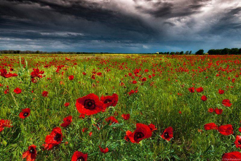 пейзаж, маки, поле, цветы, вечер, гроза Вечер перед грозойphoto preview