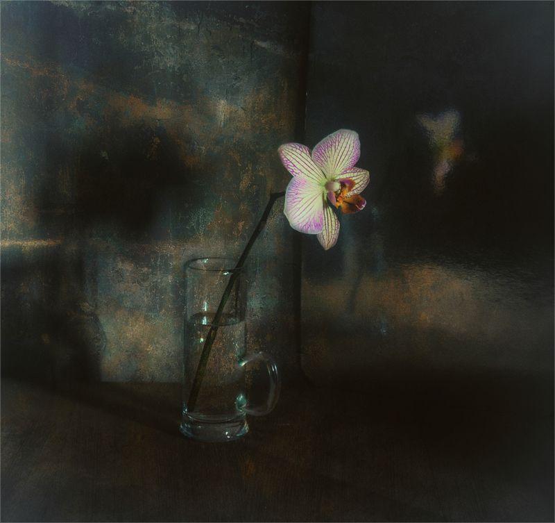 still life, натюрморт,  цветы, природа, орхидея,  винтаж, минимализм натюрморт с цветкомphoto preview