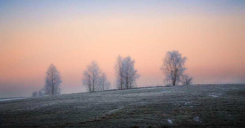 зима, рассвет, иней, Иней на деревьяхphoto preview