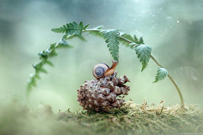 украина, коростышев, улитка, лето, лес, красота, макро, макро мир, природа, макро-красота,  макросьемка, чорный, ***photo preview