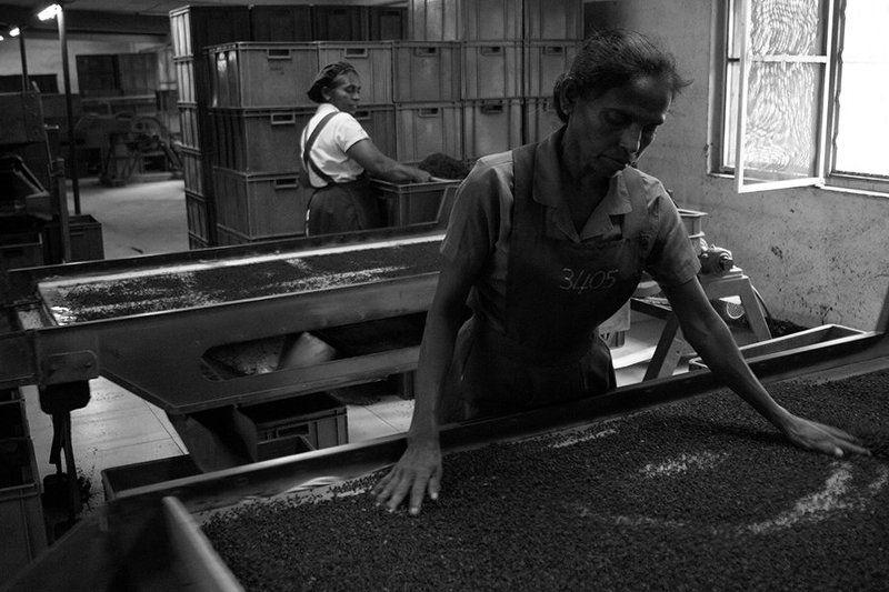 жанр, стрит, шри ланка, estet mf, sri lanka, street, genre, чайная фабрика, tea factory на чайной фабрикеphoto preview