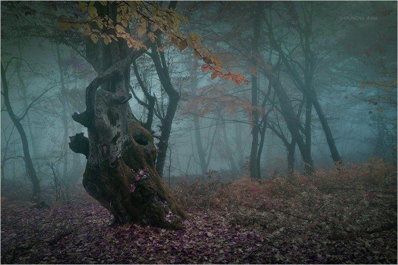 Мистический лес 8photo preview