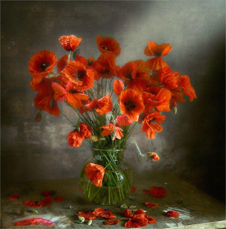 still life, натюрморт,  цветы, природа,  винтаж, маки натюрморт с макамиphoto preview