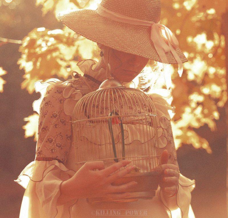 The Autumn\'s Strokesphoto preview