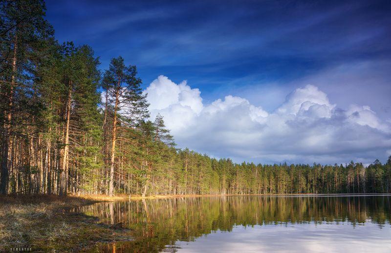 карелия, сосны, озеро, небо, облака. Небеса Карелии.photo preview