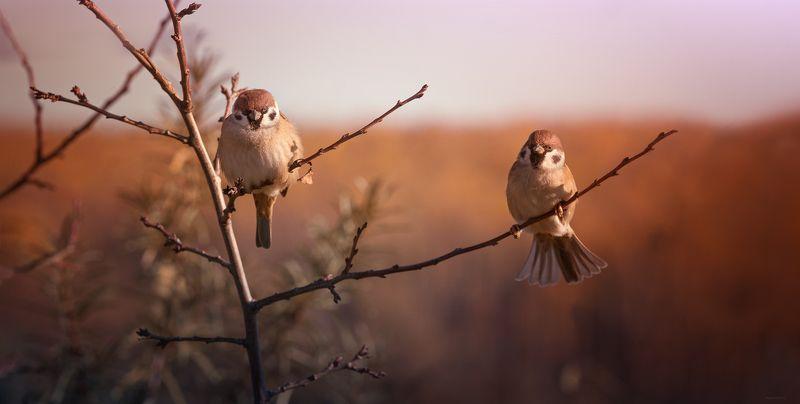 природа, лес, животные, птицы Жених и невестаphoto preview