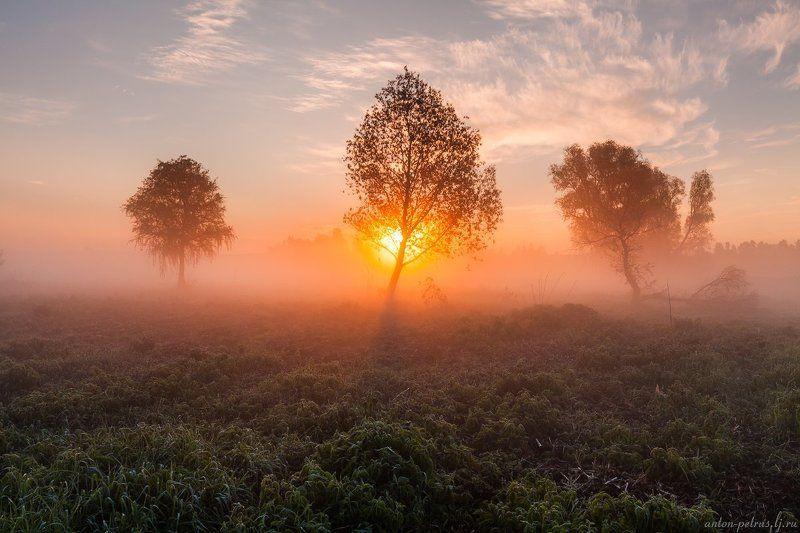 рассвет, туман, река, отражение Запах маяphoto preview