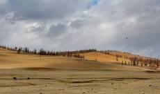 в Монголии