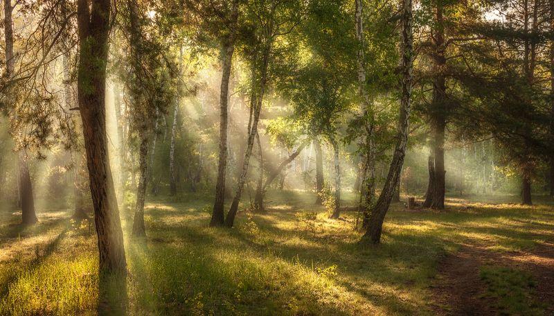 landscape, пейзаж, утро, лес, солнце, солнечный свет, солнечные лучи, тропинка, прогулка, прогулки в лесуphoto preview
