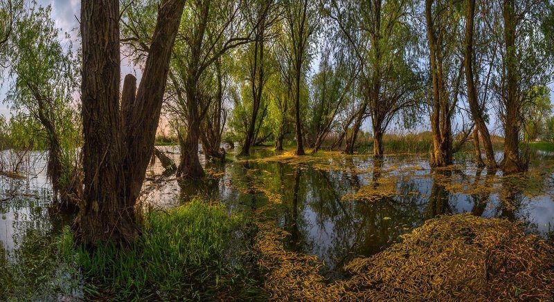 весна, река, астраханская область, рассвет, деревья, половодье, лес, Половодье в лесу.photo preview
