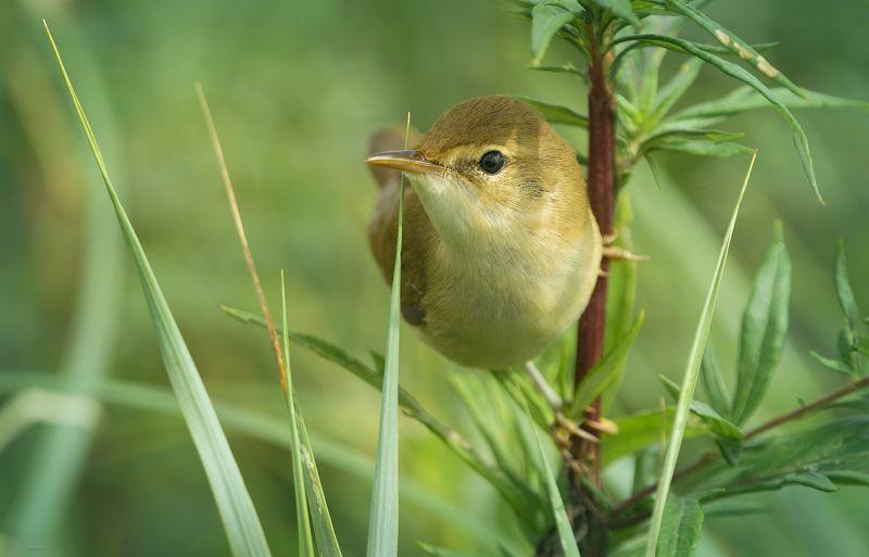 природа, лес, животные, птицы Обзор владенийphoto preview