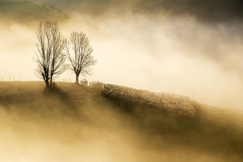 hill,trees,sheeps,mist,fog,nature, The hillphoto preview