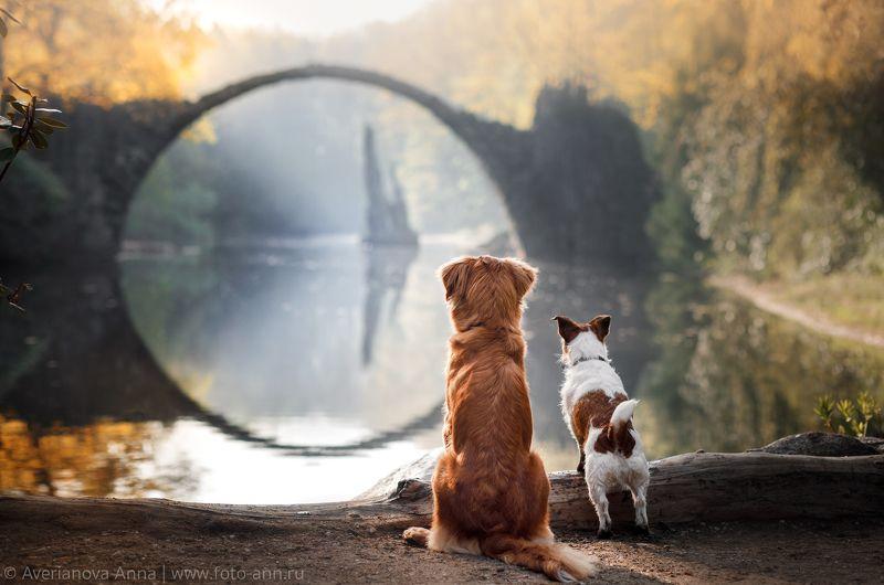 собаки, природа, мост, Германия Любуются чудесным видом) photo preview