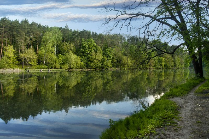 весна,река,берега,деревья Май ...photo preview