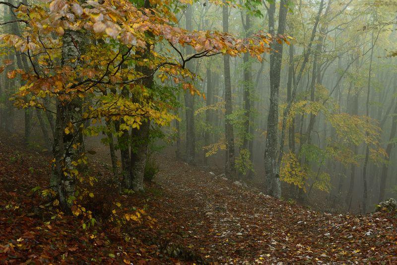 Осень в Крыму....photo preview