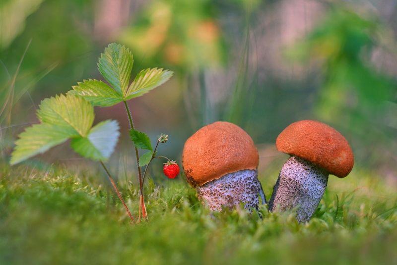 грибы, природа, макро Грибные местаphoto preview