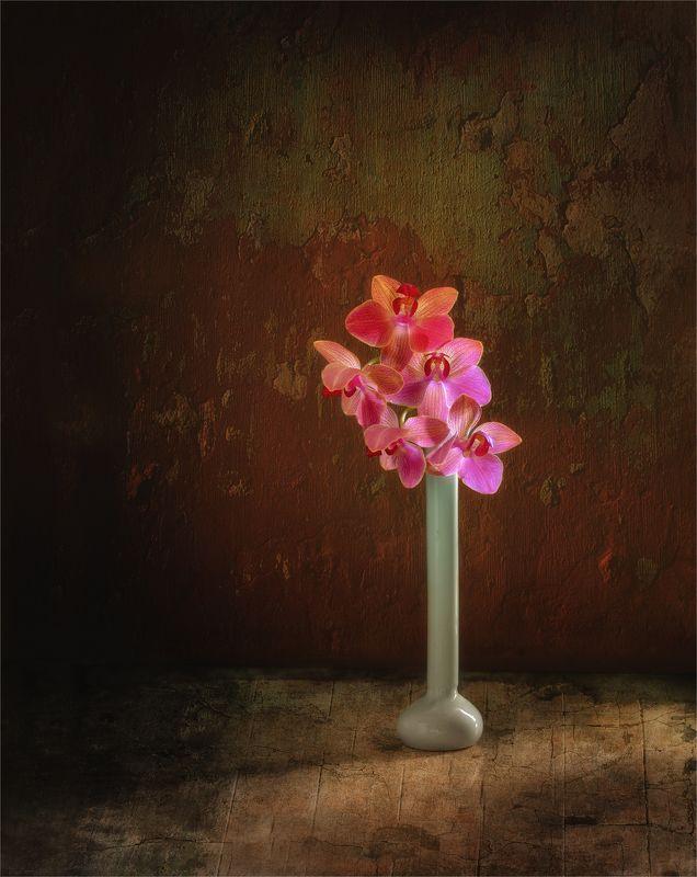 still life, натюрморт,  цветы, природа, винтаж, орхидея, минимализм натюрморт с цветами орхидеиphoto preview