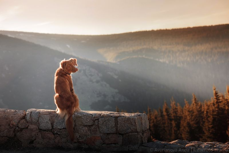 собака, природа, горы Рики и Góryphoto preview