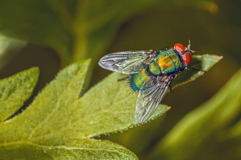 муха, жук, крылья, лист, хобот, свет, муравей, мошки, трава Букашкиphoto preview