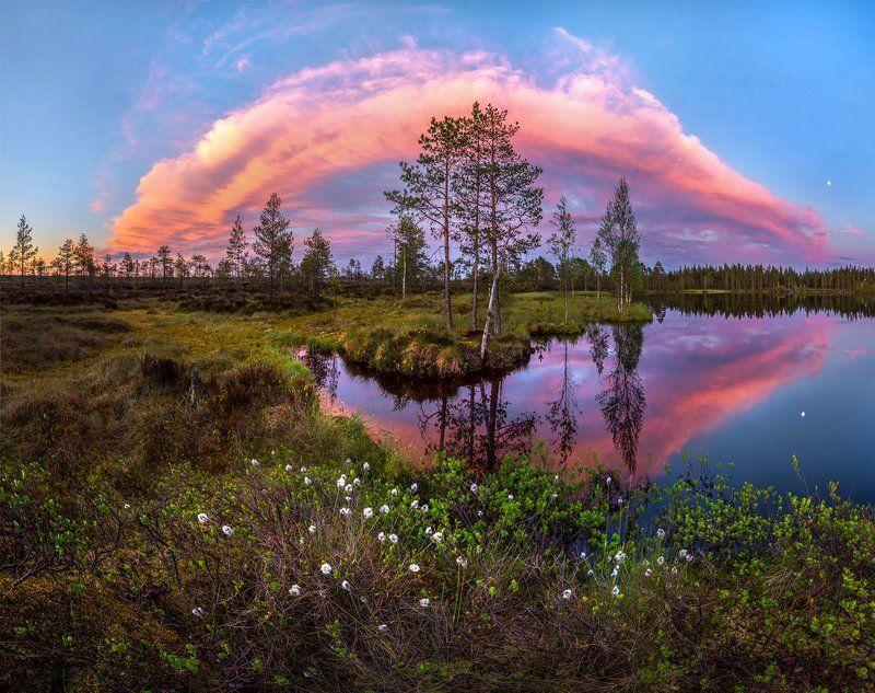 болото, ленинградская область, белые ночи, лето, озеро, сумерки, закат, пушица, облака, сосны, берег, Белые ночи севера.photo preview