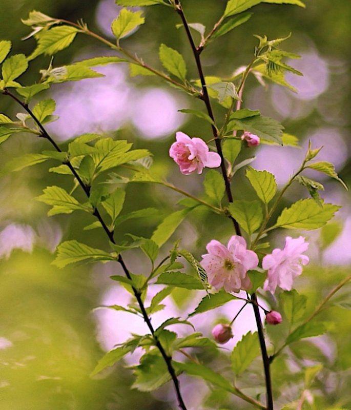 весна, spring, миндаль, almonds Terry Аlmondsphoto preview