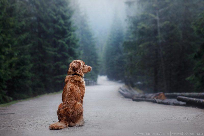 собака, природа, горы, путешествие \