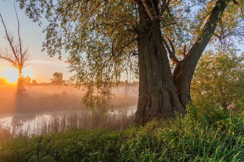 рассвет, туман, река, отражение Пробуждениеphoto preview