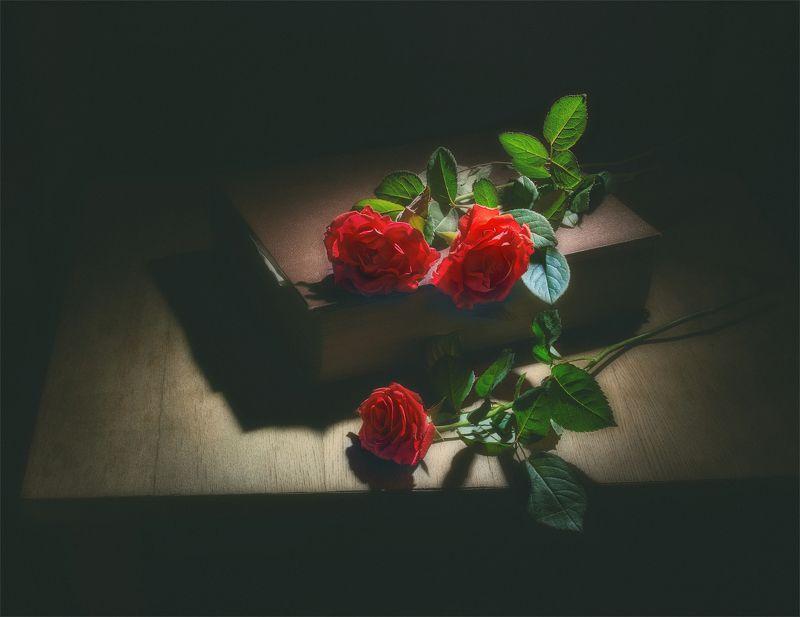 still life, натюрморт,  цветы, природа,  книга, винтаж, розы, минимализм три розыphoto preview