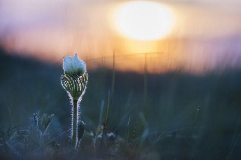 Тихо с солнцем прощался ...photo preview