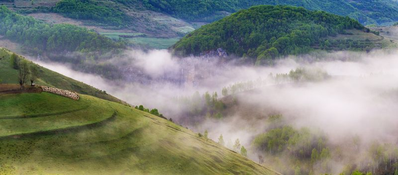 nature,colors,mist,fog,trees,earth,apuseni, The battle for earthphoto preview