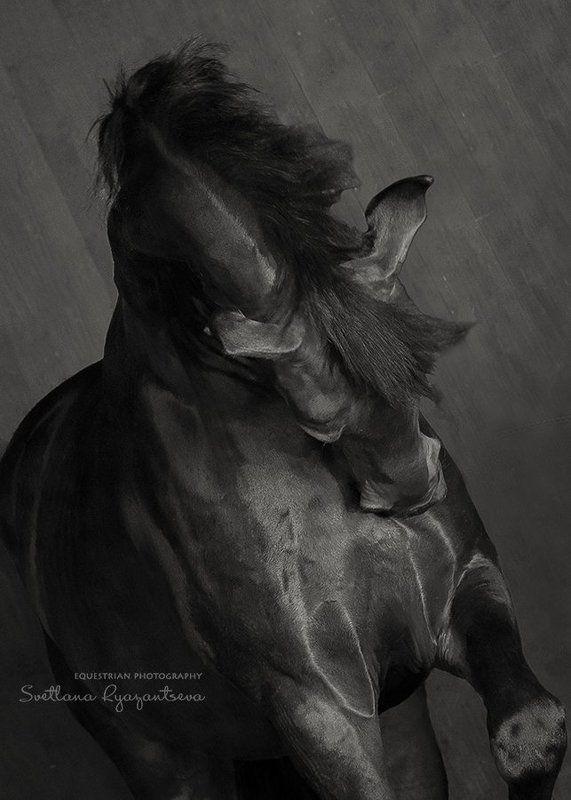 horse, black, monochrome, head, portrait, лошадь, лошади, монохром, портрет графичныйphoto preview