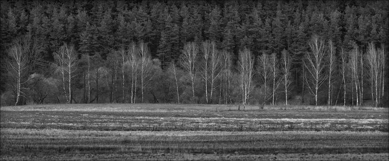весна, деревья, пашня, апрель, АПРЕЛЬphoto preview