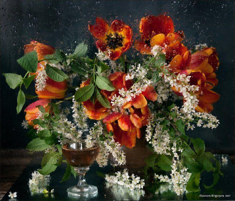 весна, дождь, мокрое стекло, черёмуха, тюльпаны, натюрморт Майский дождьphoto preview