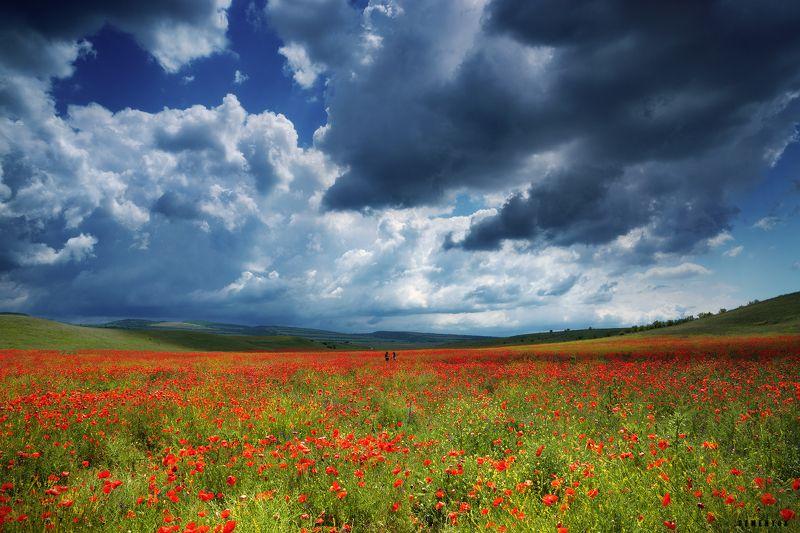 крым, маки, цветы, поле, небо, облака, люди. Между небом и маками.photo preview