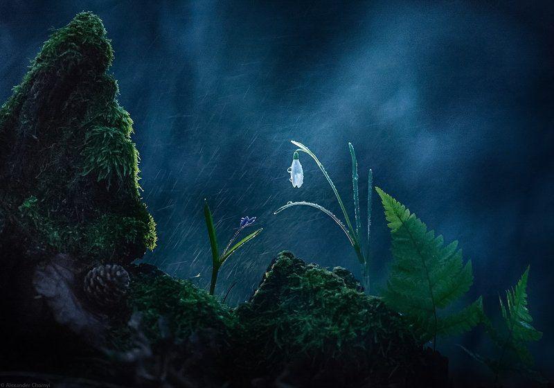 украина, коростышев, весна, лес, красота, макро, макро мир, природа, макро-красота, макро цветы, пролески, цветы, макросьемка, чорный, \