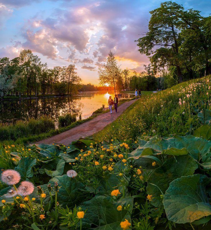 весна, парк, гатчина, цветы, закат, люди, любовь, одуванчики, лопух, лютики, пруд, деревья, тропа, дорожка, прогулка. Весенние прогулки по дорожкам паркаphoto preview