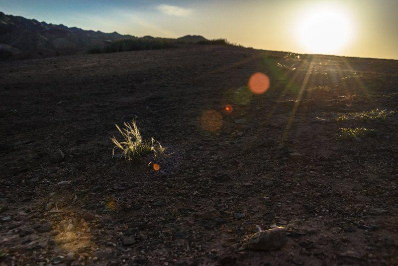 чарын, ковыль, солнечные лучи, контровый свет, пейзаж, природа, Почти закатphoto preview
