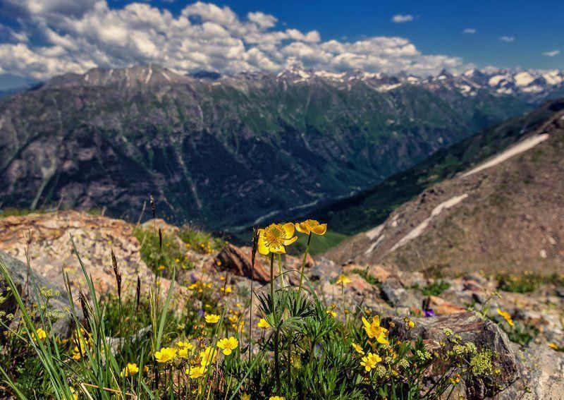 Pro цветы на вершинах Домбая...photo preview