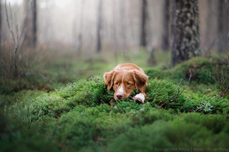собака, лес, мох, природа Отдых в лесуphoto preview