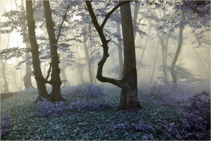 Мистический лес 9photo preview