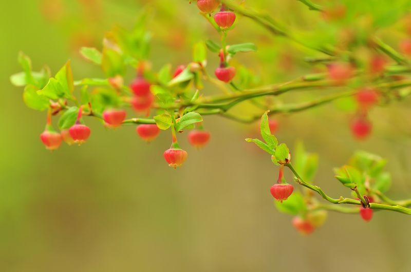 Райские яблокиphoto preview