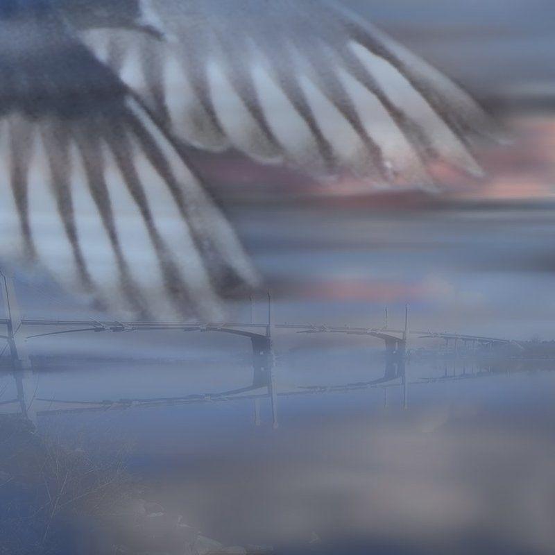 Выбери меня, птица счастья завтрашнего дняphoto preview