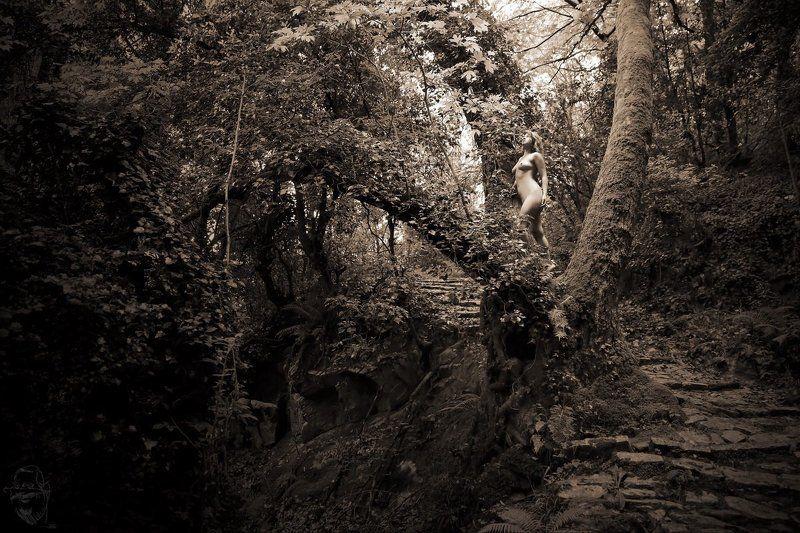 greece, tree Griechischer Urwaldphoto preview